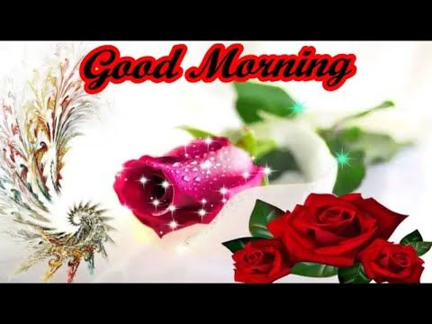 Romantic good morning hd video download love shayari in hindi