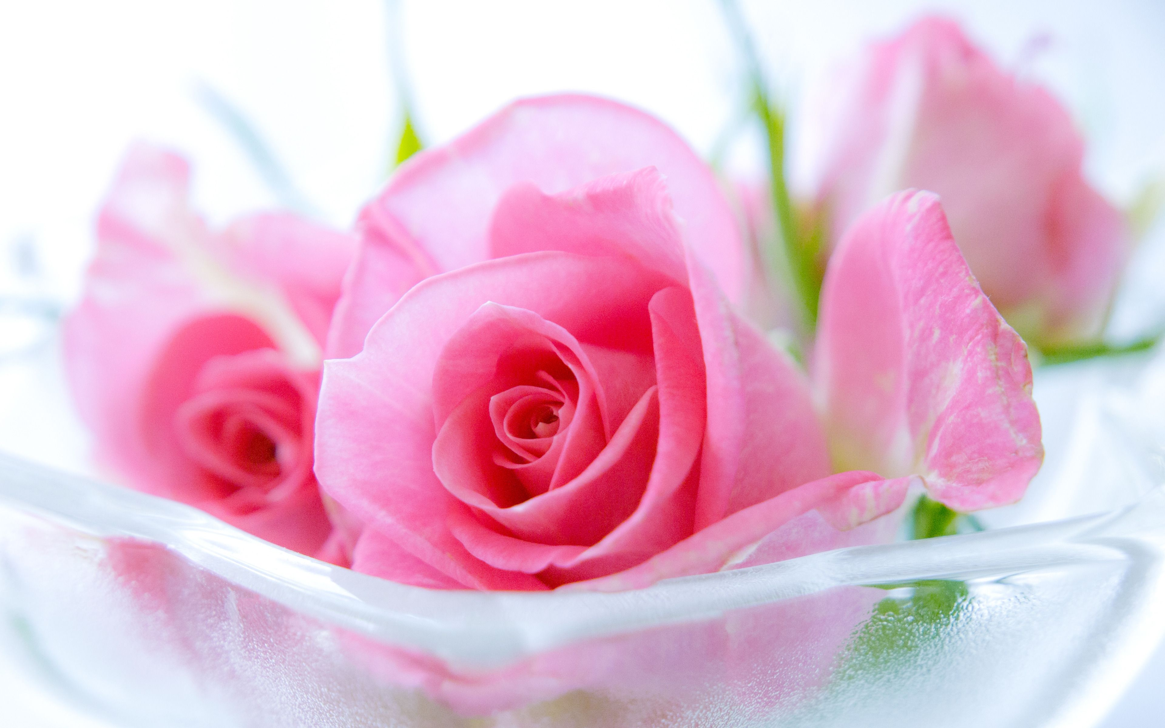Pink roses hd wallpapers rose wallpaper rose wallpaper - Pink roses background hd ...