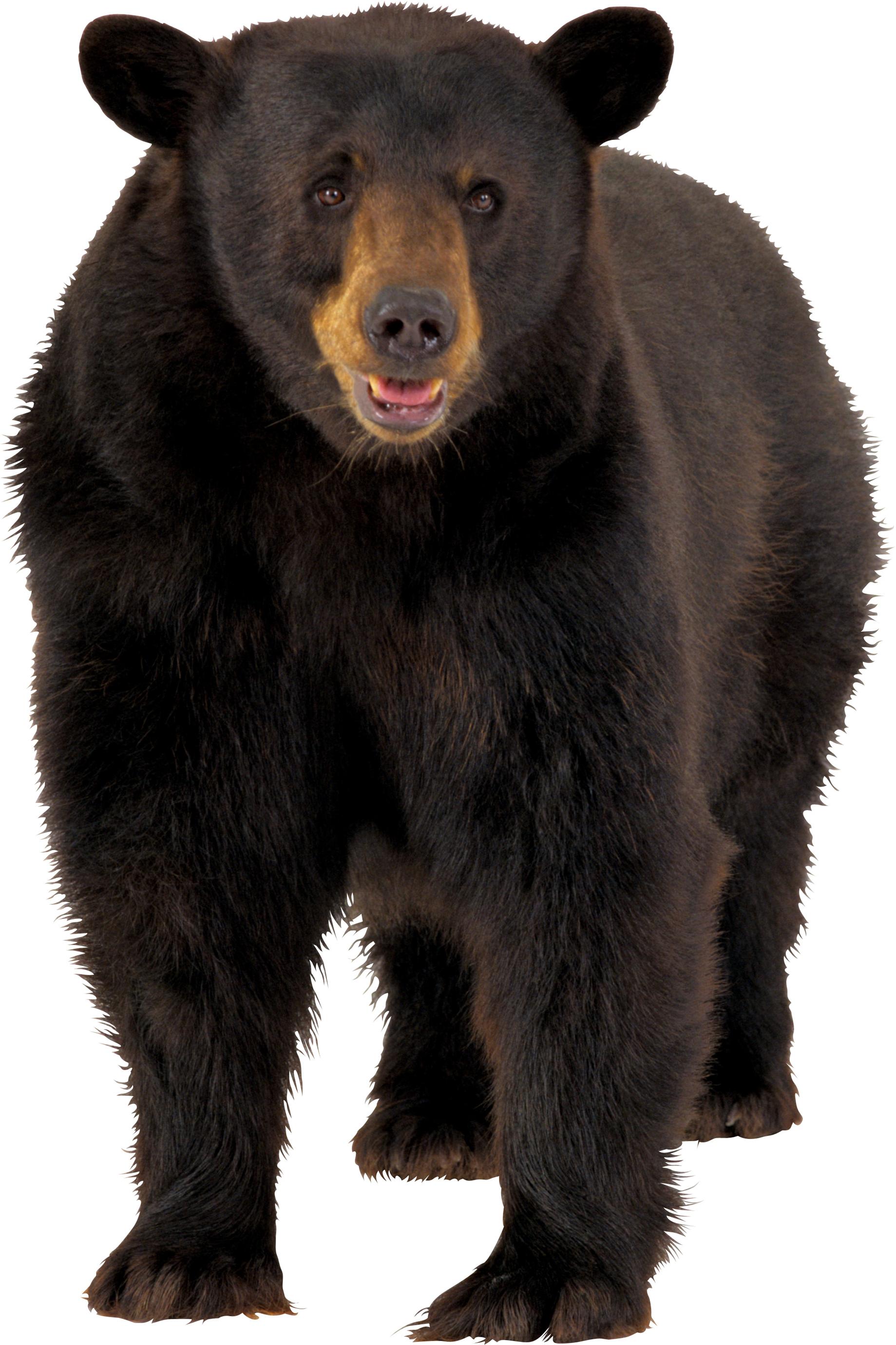 Download Png Image Brown Bear Png Image Animal Posters Bear Animal Cutouts