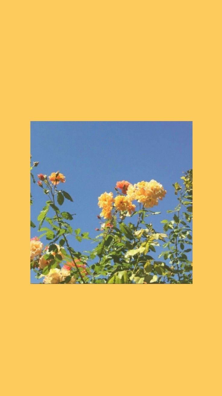 Fondo tumblr flores amarillas #yellowaestheticvintage