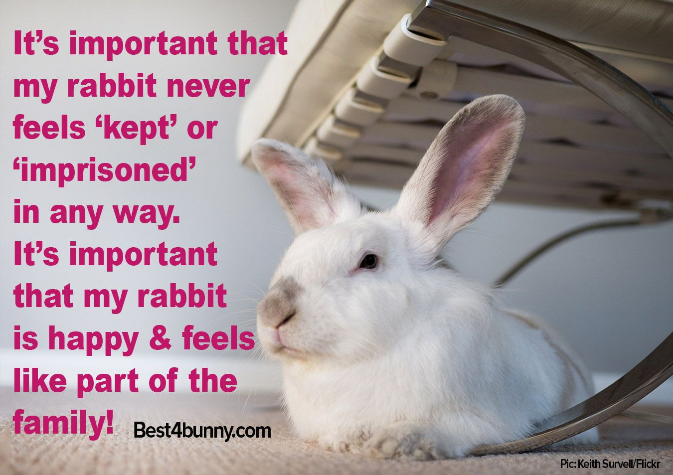 Rabbit care advice (With images) Bunny care, Rabbit care