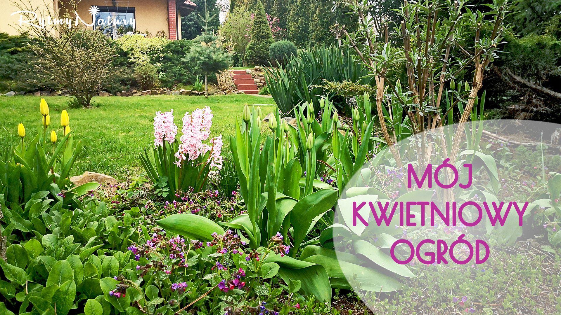 Moj Kwietniowy Ogrod Plants