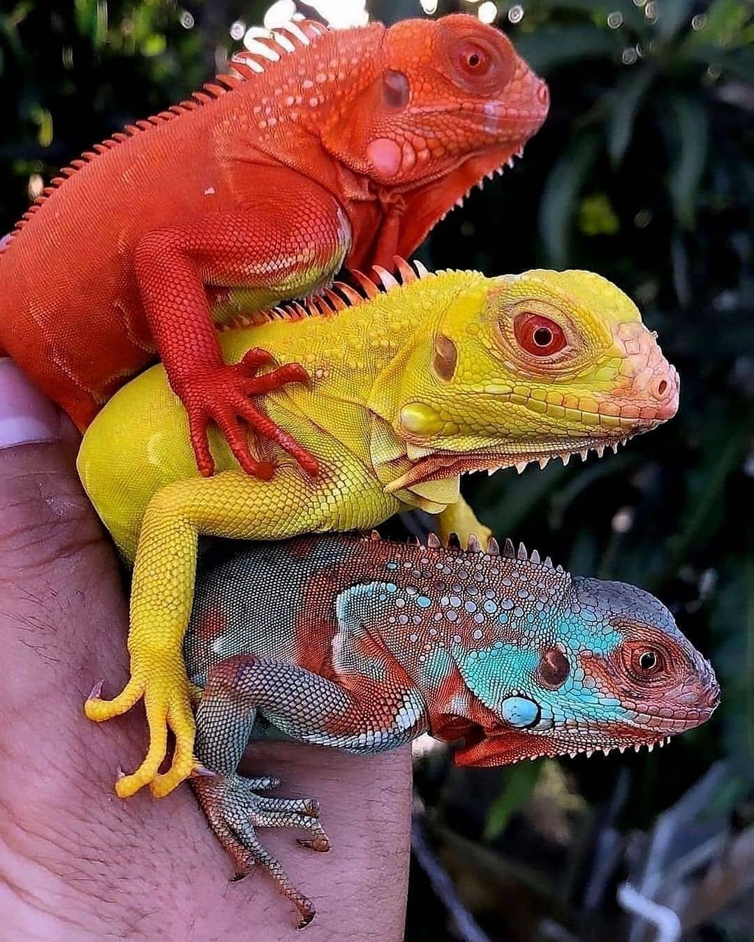 Photo By Animais Exoticos Animais Bebes Mais Fofos Animais