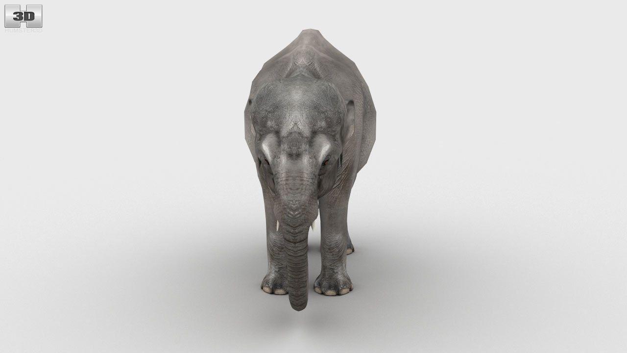 360 View Of Asian Elephant 3d Model Asian Elephant Indian Elephant 3d Model