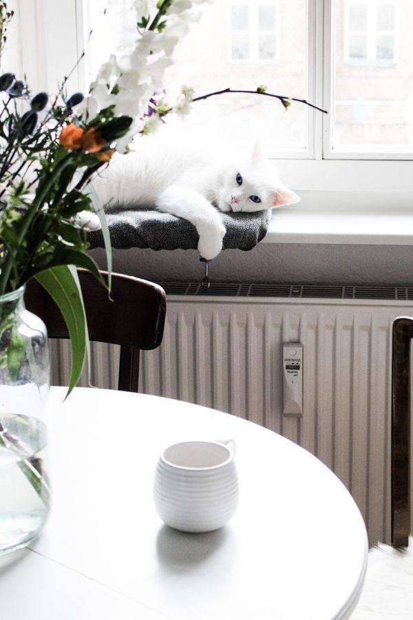 Neue Kategorie Katzenbesitzer Und Ihr Zuhause Die Homestory Mit Lieblingsmadchen Schone Wohnungen Zuhause Und Schoner Wohnen