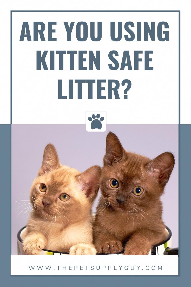 Kitten Safe Litter Kitten Safety In 2020 Cat Training Litter Training Kittens Cat Training Kittens