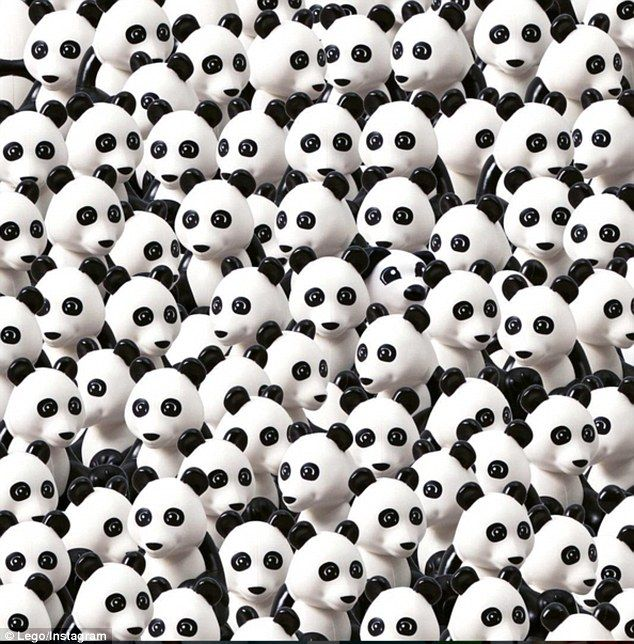 Now Can You Spot The Dog New Puzzle Hides Canine Among Pandas