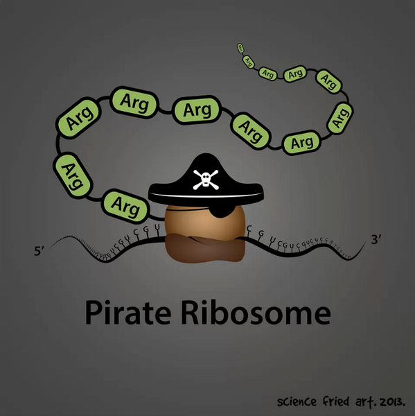 Pirate Ribosome (Biology Joke) Biology jokes, Science