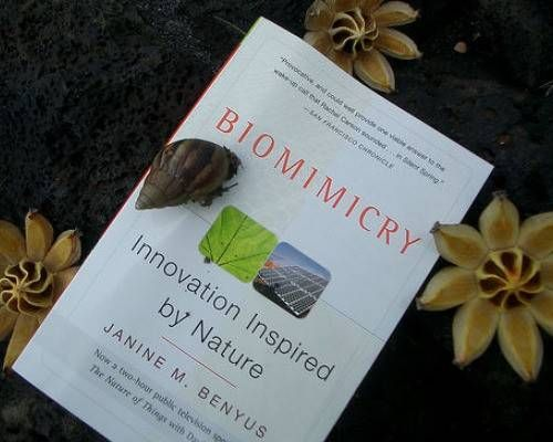 8 Amazing Examples Of Biomimicry Biomimicry Products Pinterest