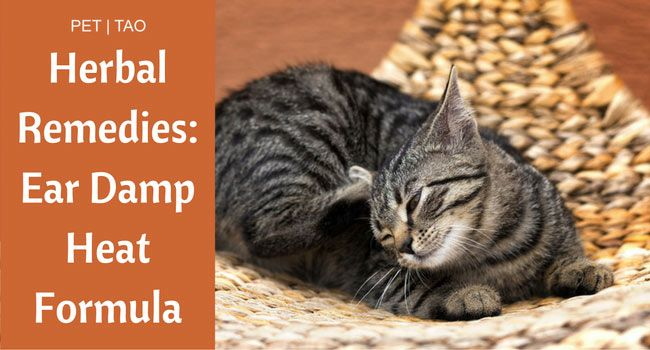 Herbal Remedy For Cat Ear Infections And Itchy Ears Pet Tao Holistic Pet Products Cat Ear Infections Itchy Ears Ear Infection Remedy