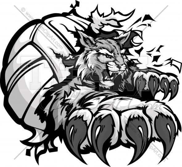 Wildcat Volleyball Cartoon Mascot With Claws Tearing Out Of A Volleyball Ball Vecto Kentucky Wildcats Logo Wildcats Logo Kentucky Wildcats Basketball Wallpaper