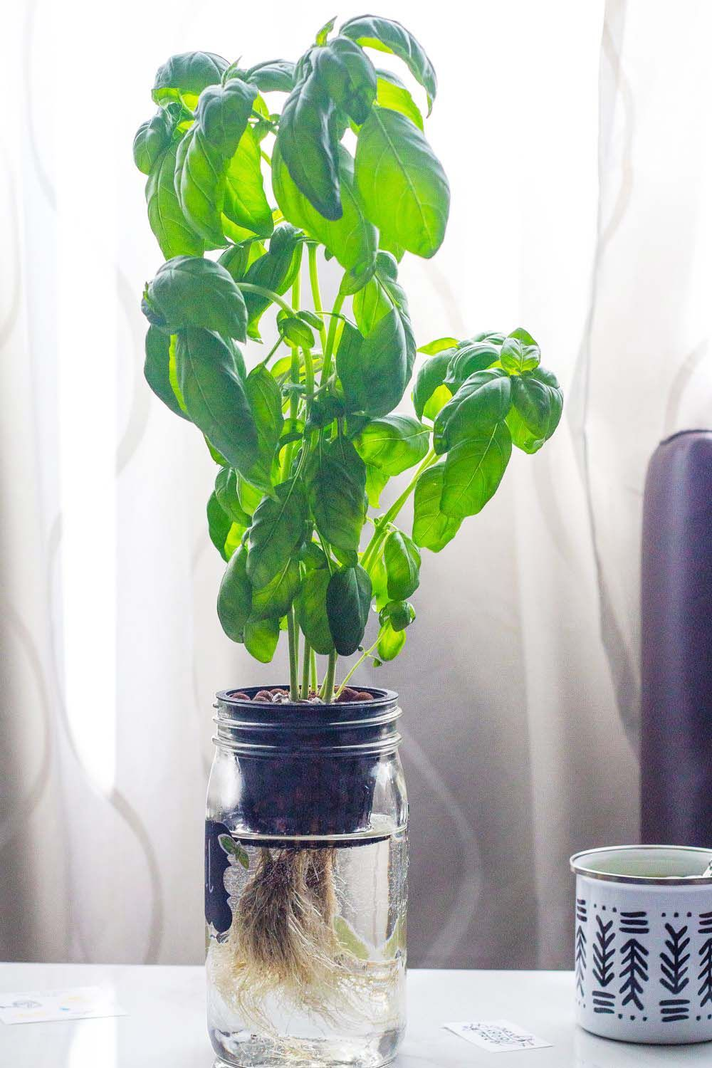20 incredible ideas for diy hydroponic garden in 2020