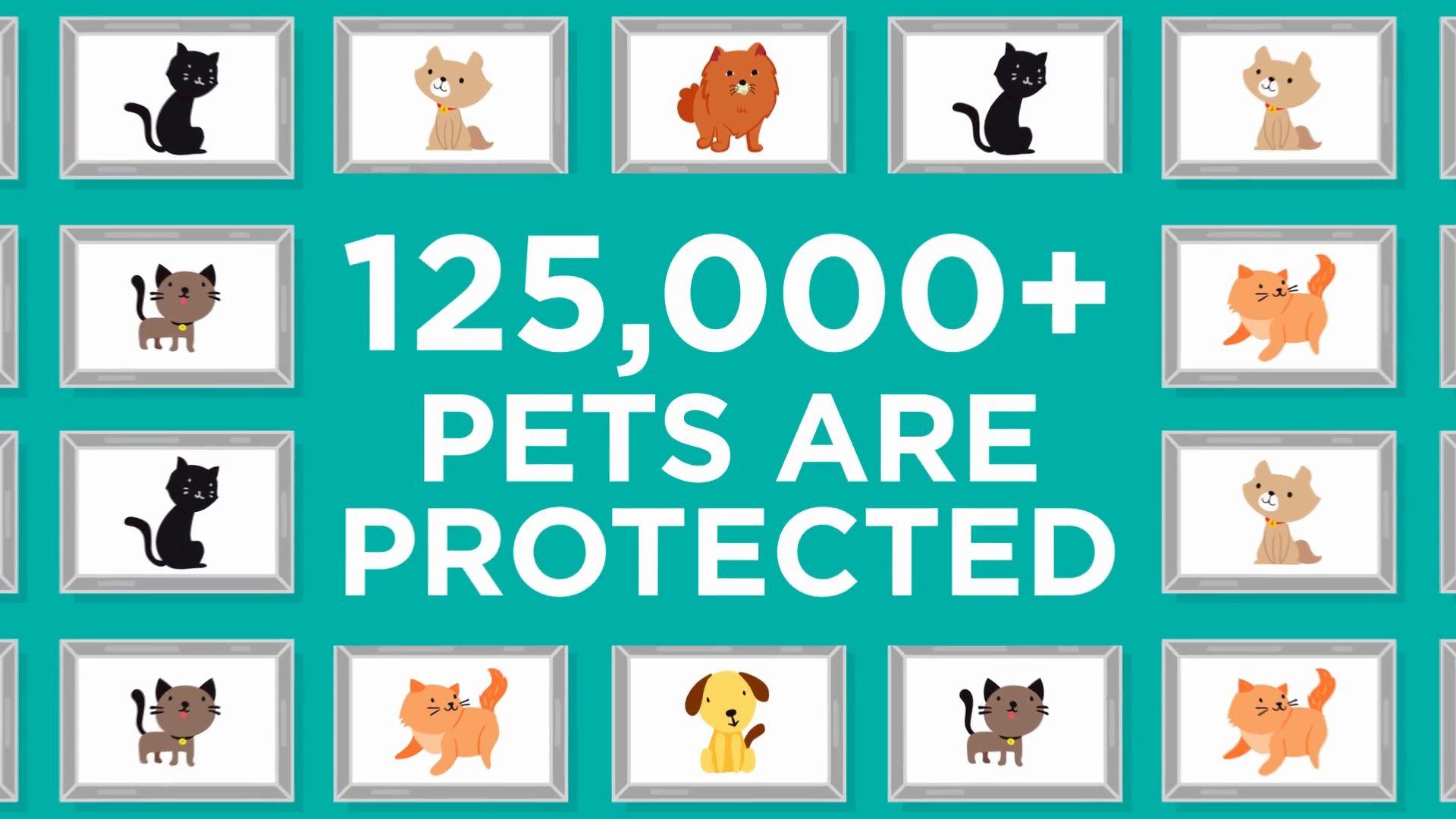 Napw Members Pet Insurance Pets Best Cool Pets Pet Insurance Best Pet Insurance