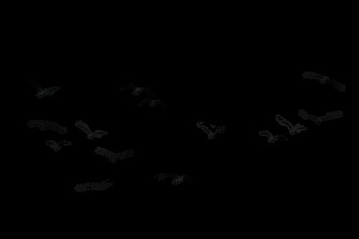 Disney Parks Aves Volando Dibujos De Pajaro Tatuajes De Pajaros Volando