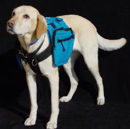 Introducing The Classi Pack Harness The Classi Pack Dog Back