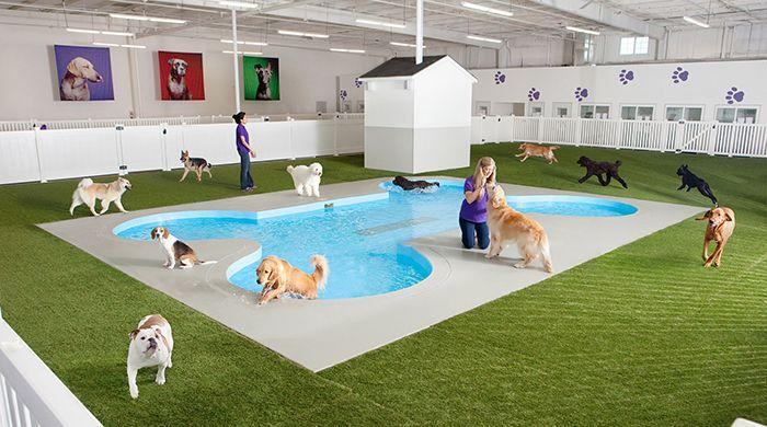 Feeding Frenzy The World S Best Chefs Descend On Wa Pet Resort Pet Spa Dog Pool
