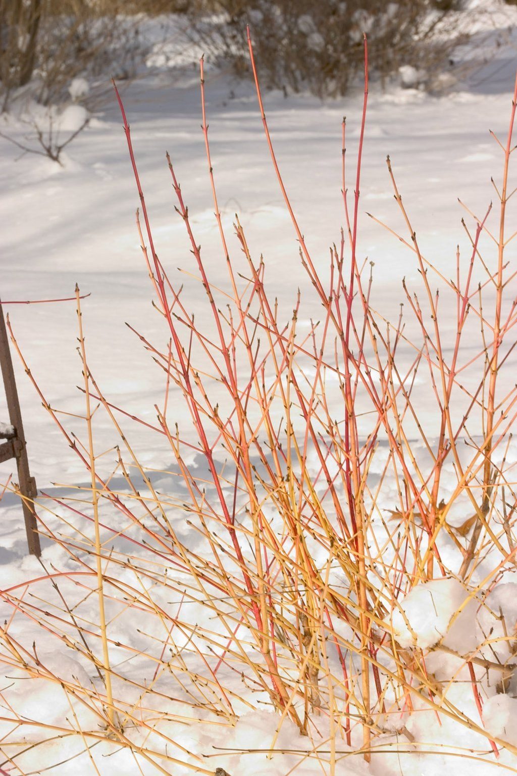 winterizing shrubs proven winners garden inspiration