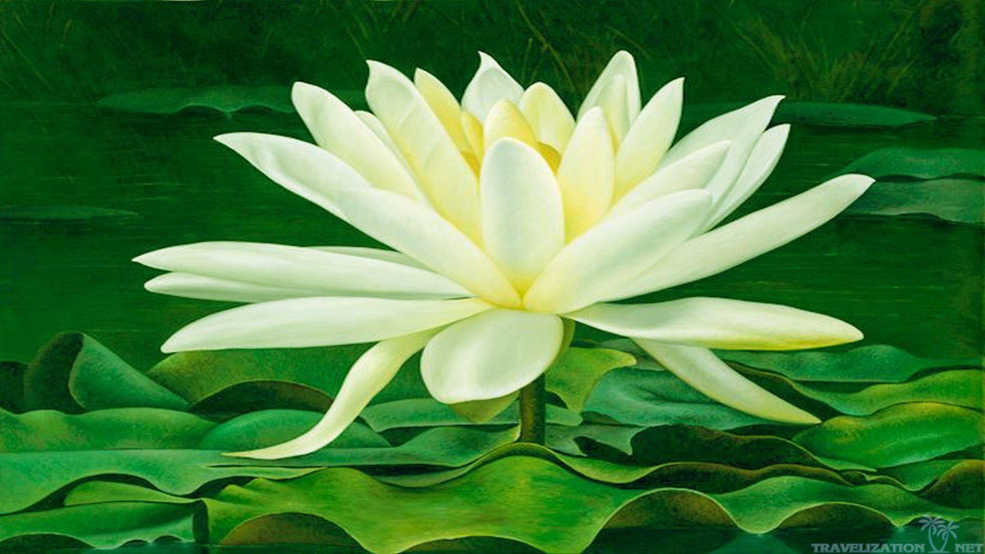 Magical beauty of lotus flower travelization id 191274 buzzerg flower izmirmasajfo Images