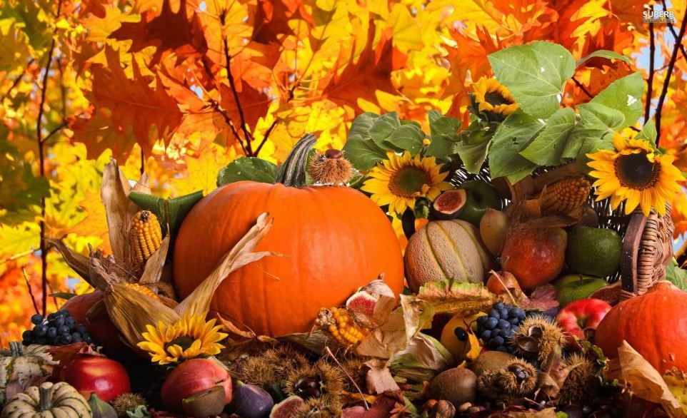 Autumn Harvest Pumpkin Wallpaper Pumpkin Wallpaper Thanksgiving Wallpaper Free Thanksgiving Wallpaper