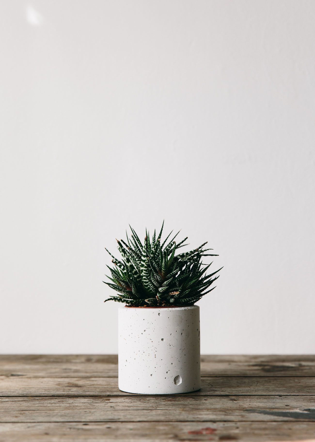 Simple And Beautiful Planters For Cacti And Succulents 400 x 300