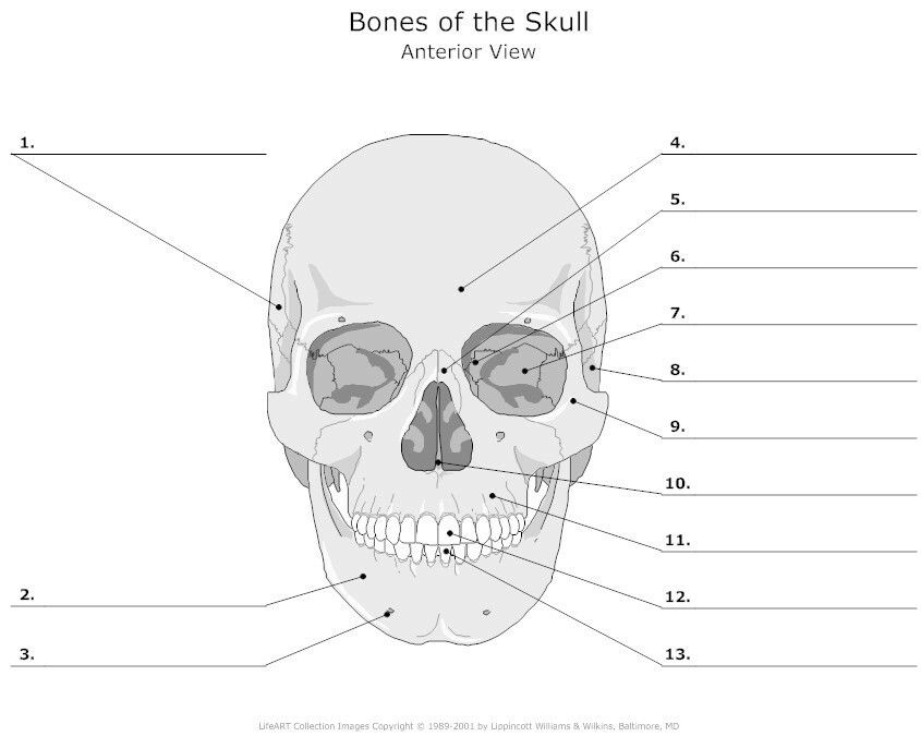 Bones of the Skull Anterior Bones Skull Pinterest