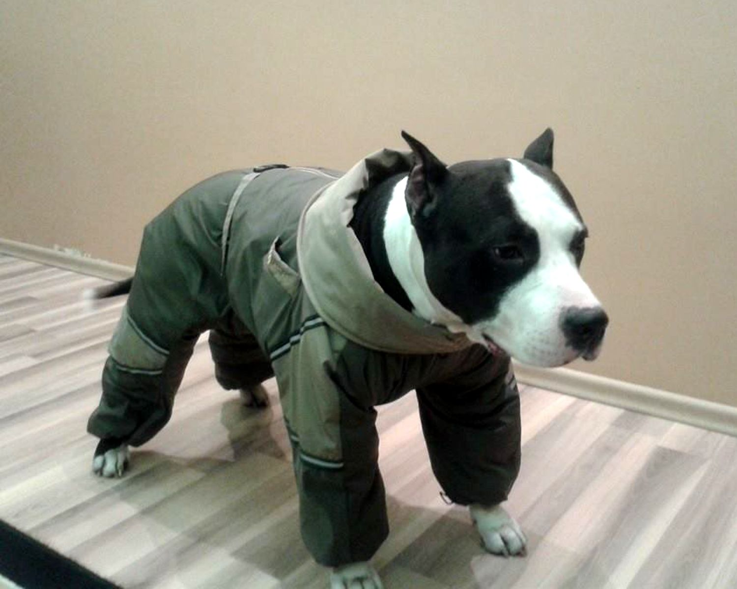Awesome Custom Made Pitbull Pit Bull Snowsuit Warm Winter Overall ...
