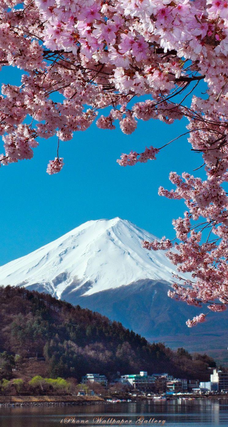 人気223位 富士山と桜 2020 富士山 壁紙 山