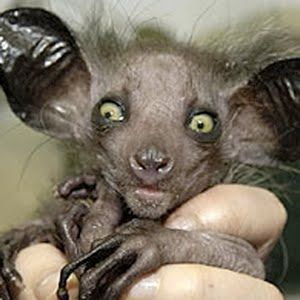 Ugly Animals Wallpapers Download - Ugly Animals Wallpapers 1.0 ...
