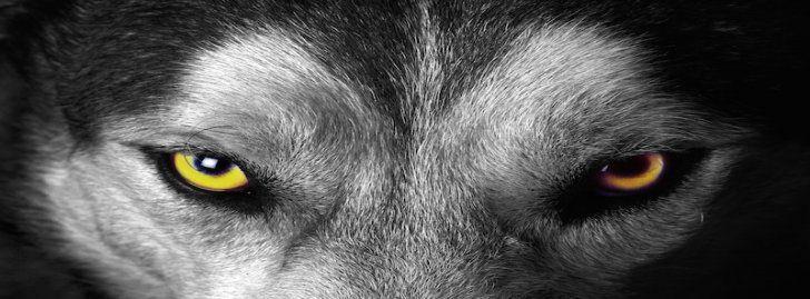 Ojos De Lobo Portadas Para Facebook Portadas Para Facebook