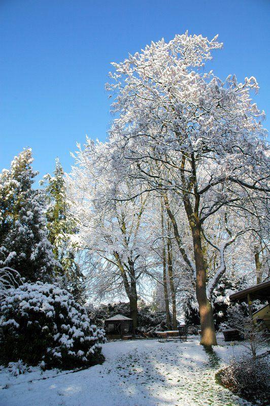 Garten Im Winter garten im winter jpg 532 800 vinter i