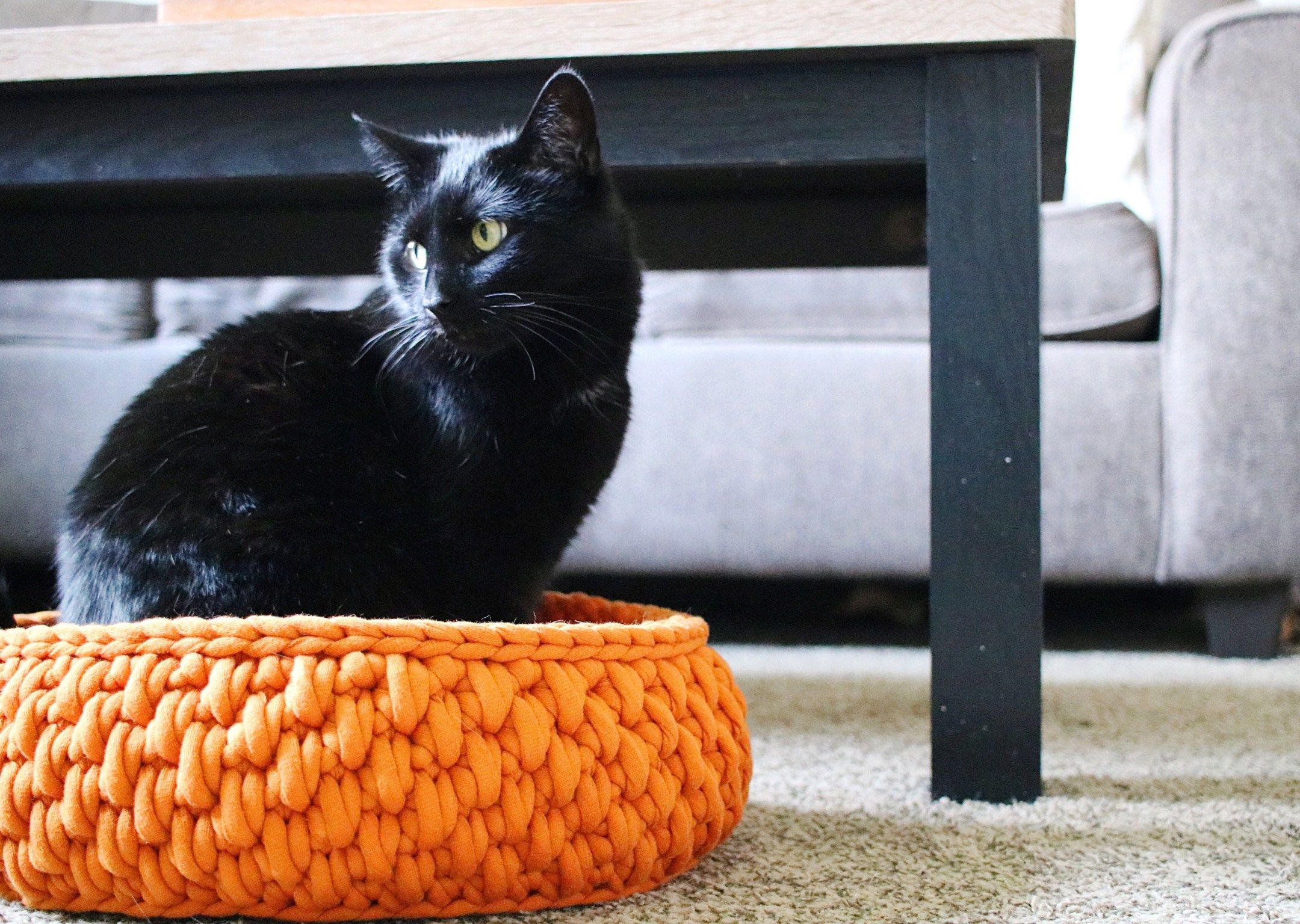 The Big Little Pet Bed A Round Cat Bed Made With Jumbo Yarn Tl Yarn Crafts Crochet Cat Bed Tl Yarn Crafts Pet Bed Pattern