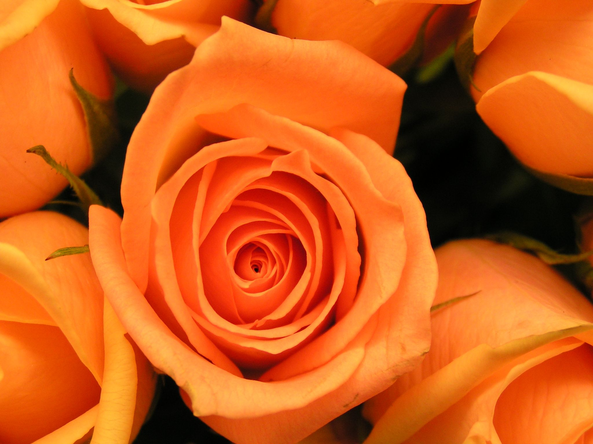 what is the meaning and history of orange roses orange