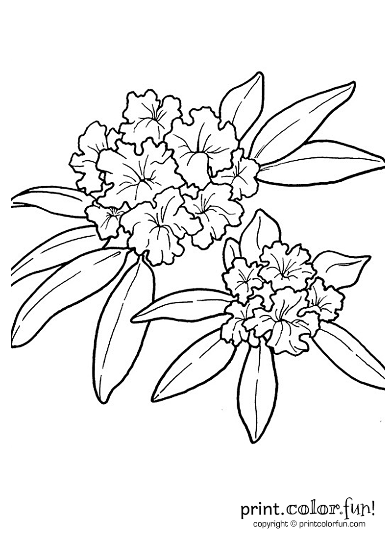 rhododendron coloring page wv is turning 150 pinterest