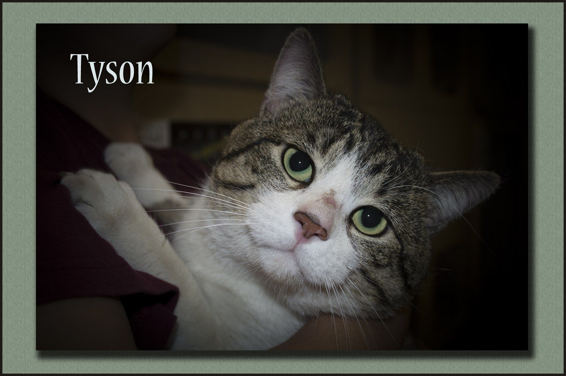 Tyson - I am a former fighter with a soft voice. I am a big guy who ...