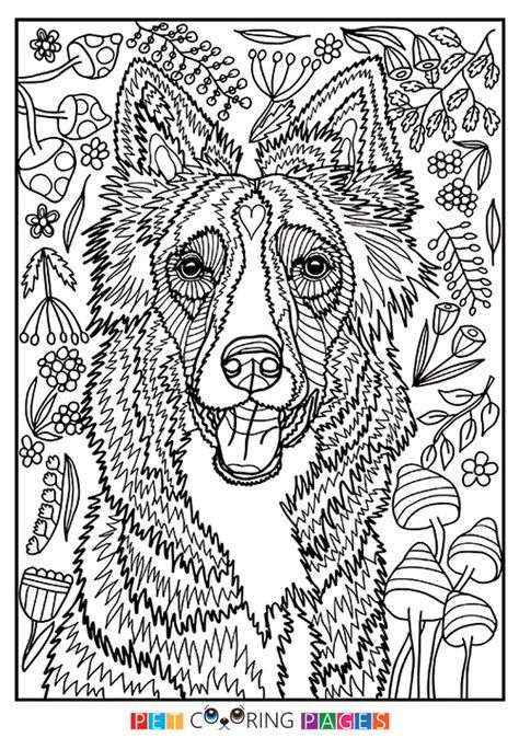 Free Printable Border Collie Coloring Page Available For Download Simple And Detailed Versions For A Dog Coloring Page Dog Drawing Simple Horse Coloring Pages