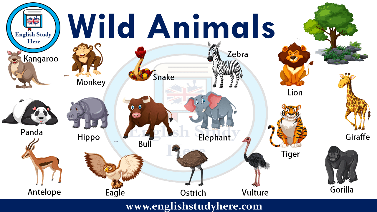 Wild Animals Name List With Picture