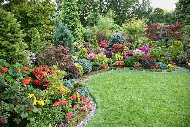 Beautiful garden flowers of summer