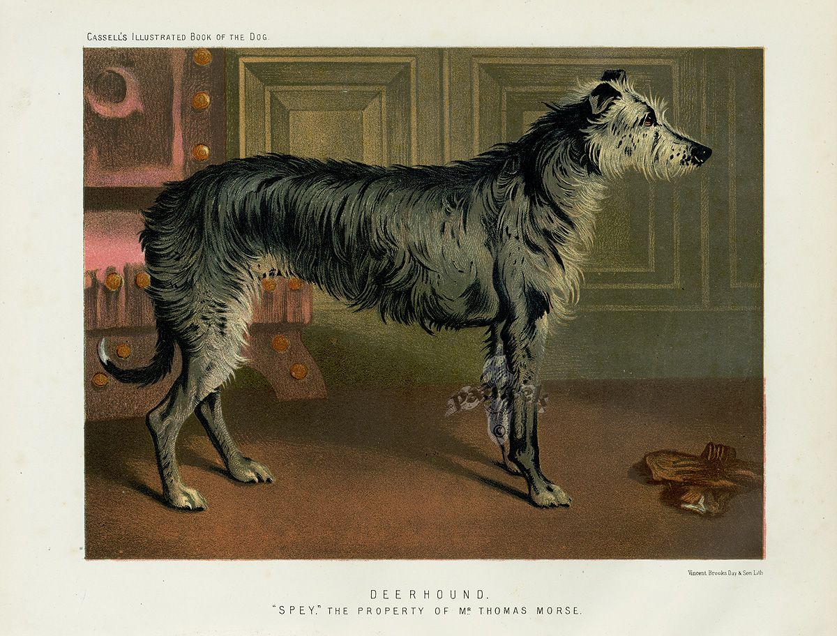 Illustrated Book Of The Dog 1890 Book Illustration