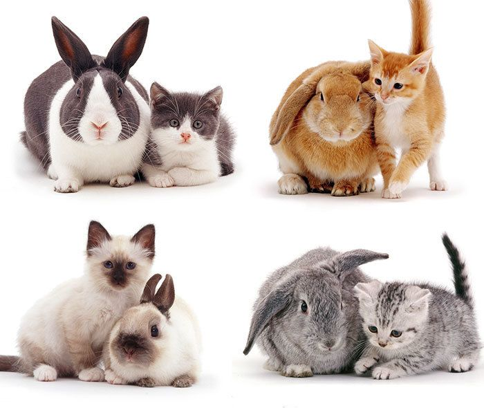 This Photographer Shoots Pet Brothers From Other Mothers And It S Too Adorable Cute Animals Animals Funny Cats Kitten Pictures