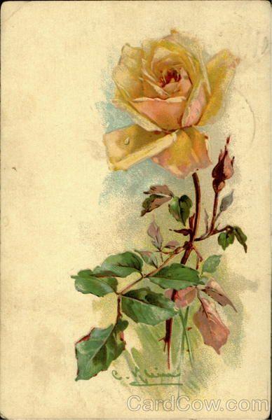 Yellow Rose C. Klein Flowers
