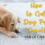How to Get Dog Pee Smell Out of Carpet (New & Set-in Stains) #setinstains