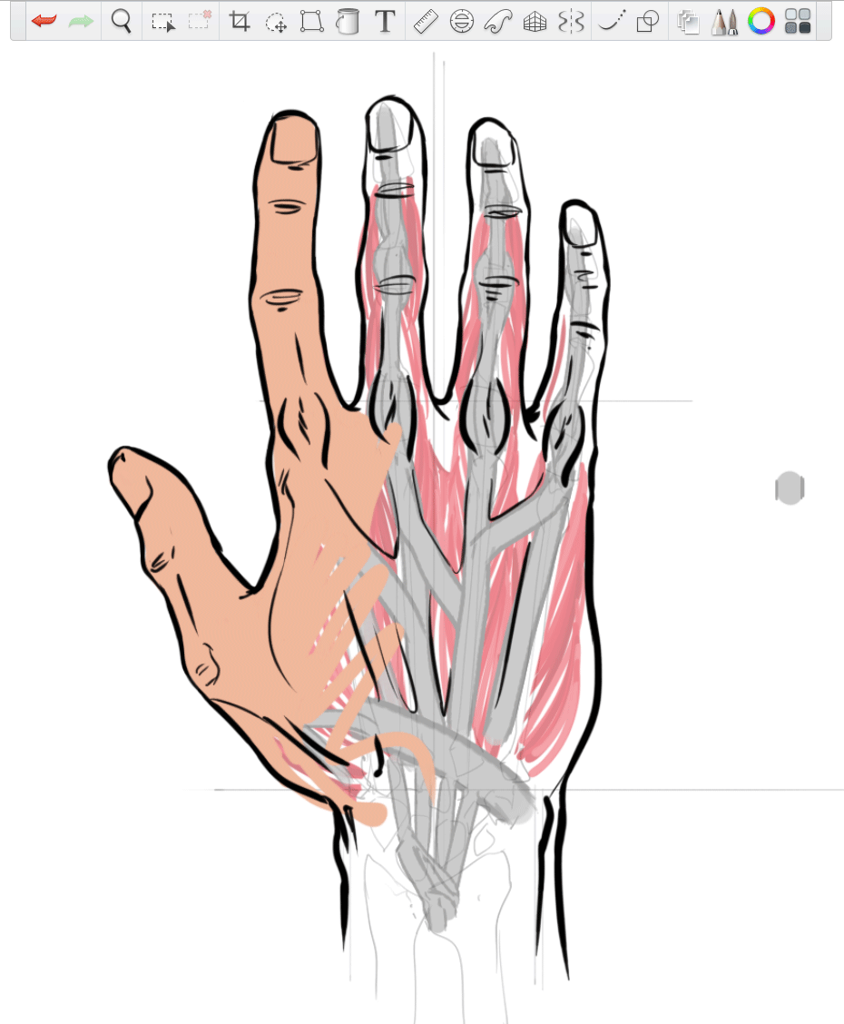 2 Ways to Draw Hands: Anatomy & Forms — Hands are some of the most ...