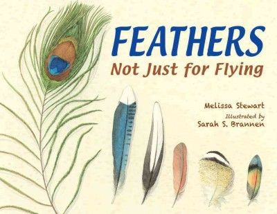 """Feathers Not Just for Flying by Melissa Stewart. """"A beautiful, poetic work with all kinds of interesting facts about birds and their feathers."""" -Anne M., Hill Branch Library"""