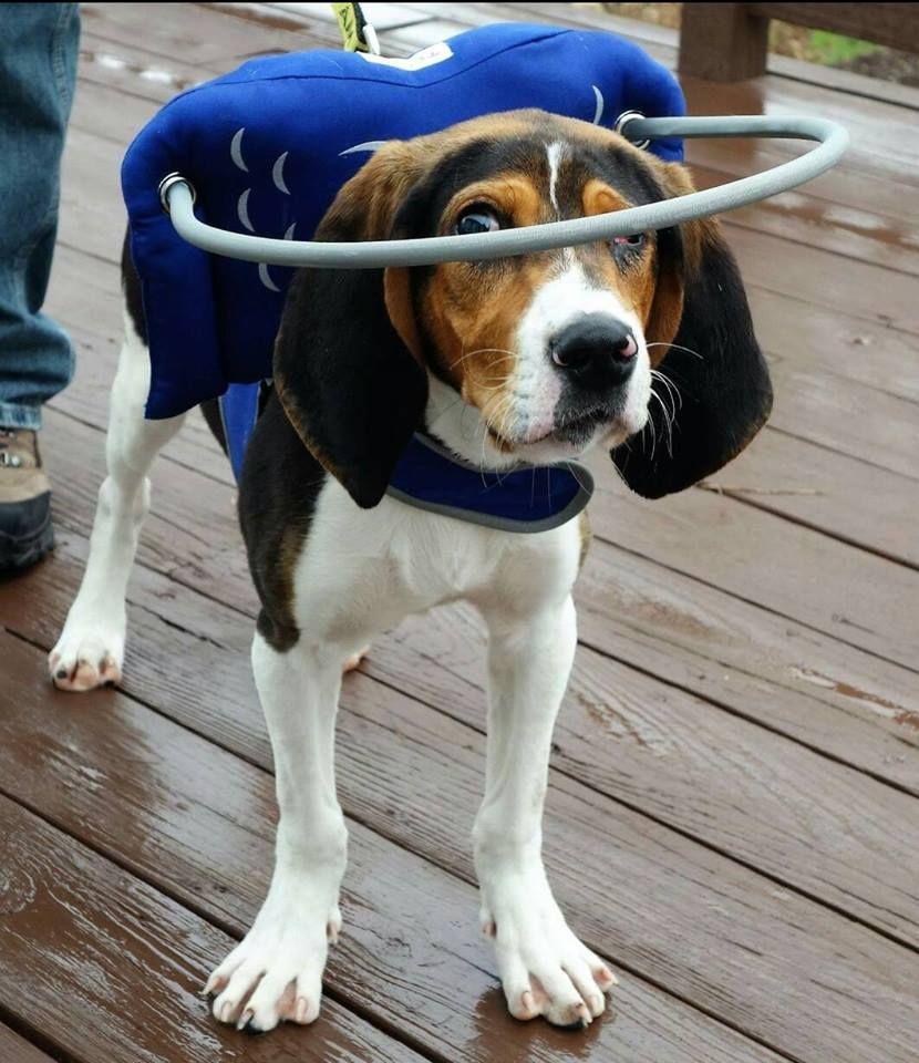 14+ Survivor tails animal rescue ideas