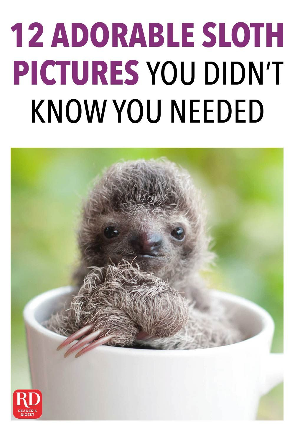 12 adorable sloth pictures you didnt know you needed