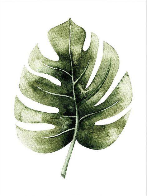Poster Kvilis Monstera Leaf Blatt Aquarell Blatter