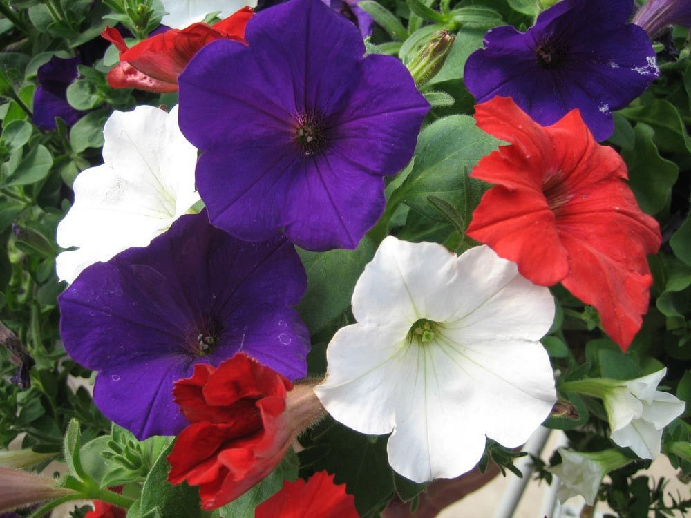 Pin On Bulk Flower Seed For Sale