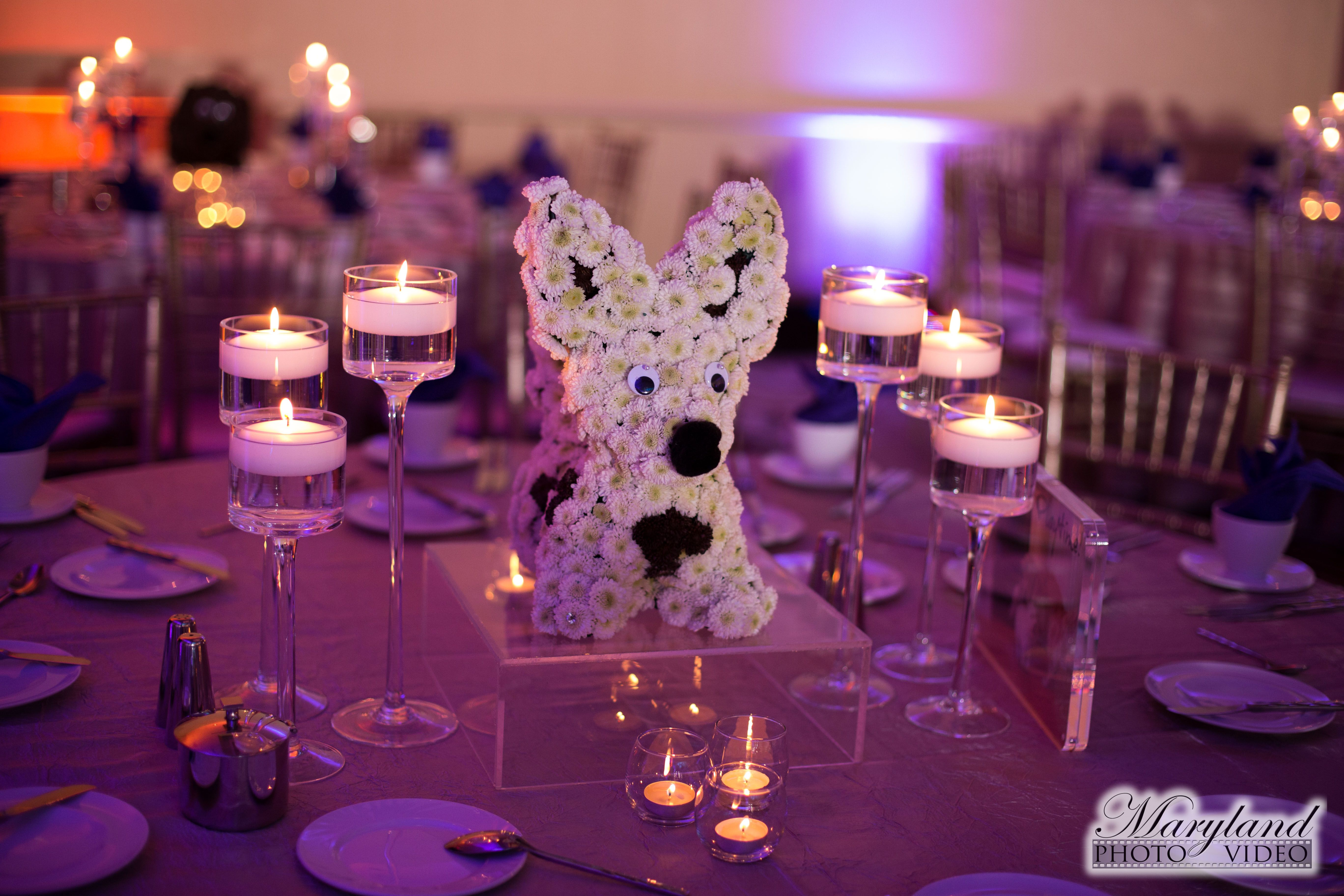 Fl Dog Centerpieces At Themed Bat Mitzvah Party Westin Tysons Corner Pop Color Events Adding A Of To Bar Mitzvahs In Dc