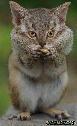 Eichkatze Lustige Haustiere Coole Tiere Niedliche Tiere