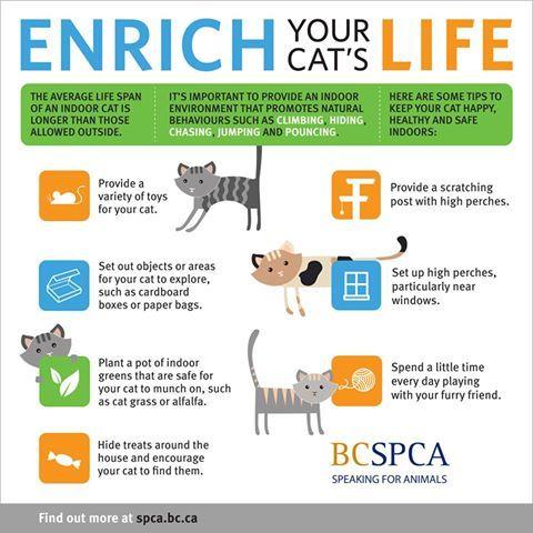 100 Pet Care Ideas Pet Care Pets Spca
